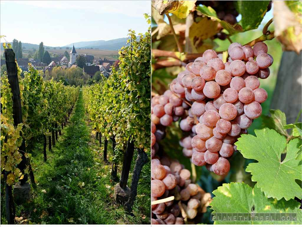 Vineyard-Mix1
