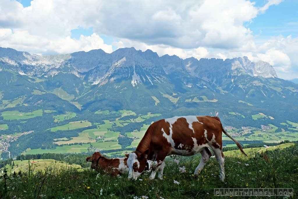 Tirol (1)