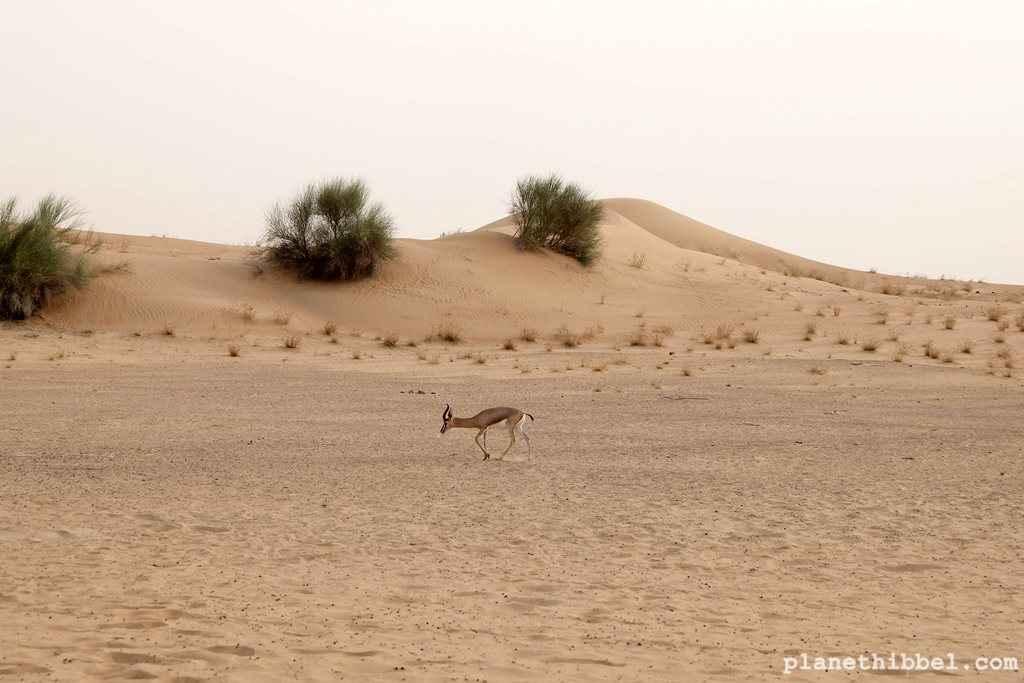 Dubai_Wüste1