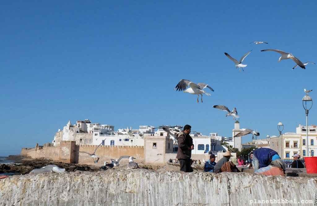 Essaouira34
