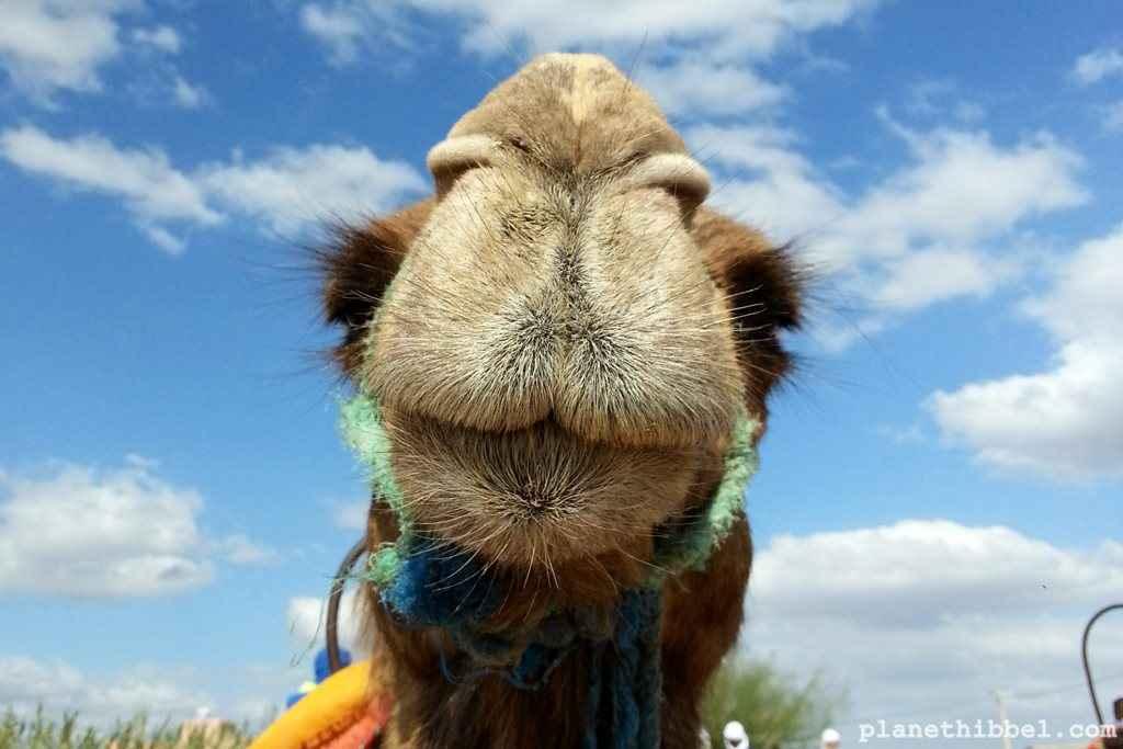 Kamelreiten9