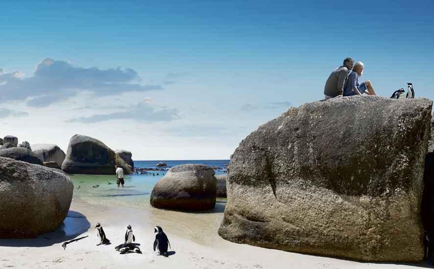 Penguins Ausschnitt klein_Boulders beach