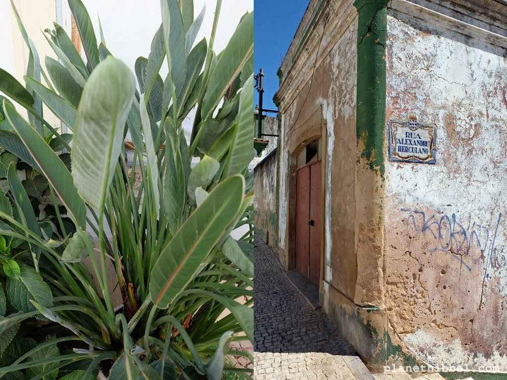 Algarve18