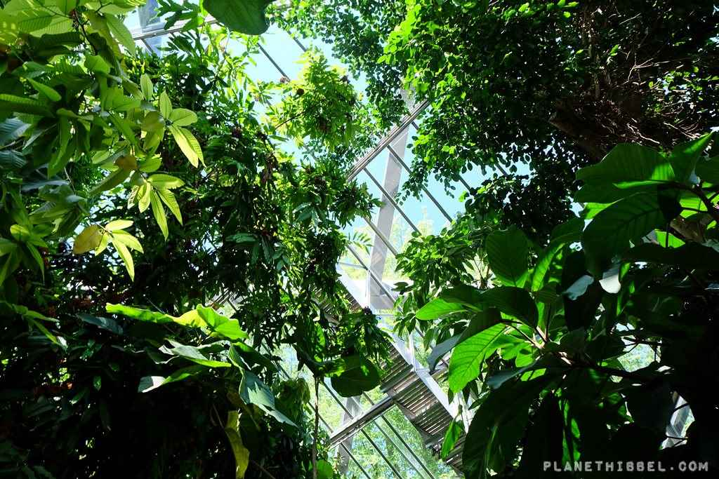 PlantenundBlomen1