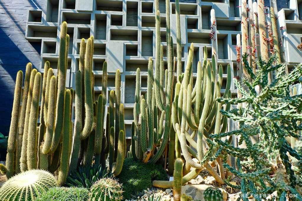 PlantenundBlomen2