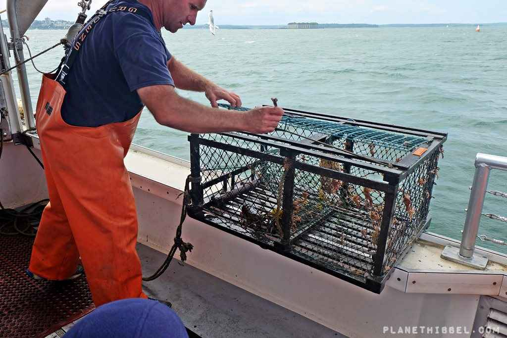 Lobsterfishing1