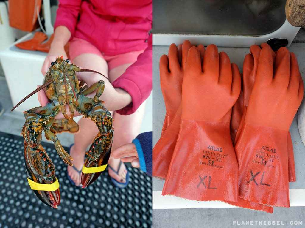 Lobsterfishing11