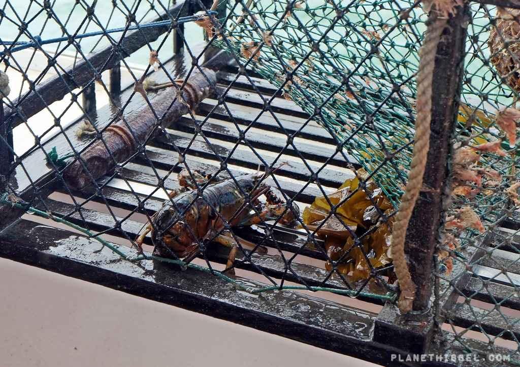 Lobsterfishing2