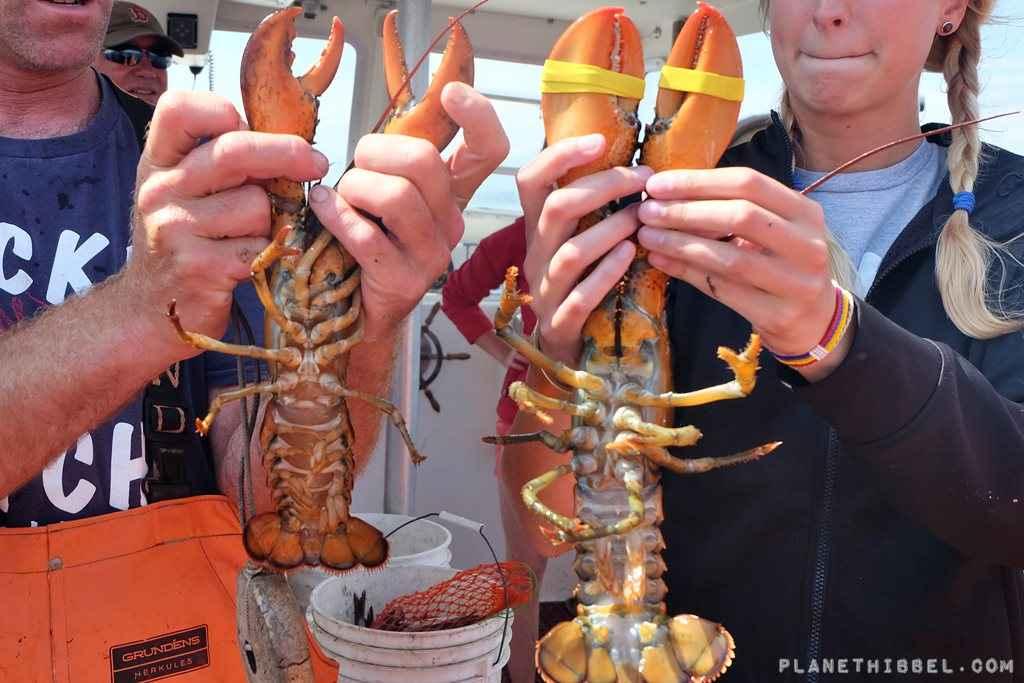 Lobsterfishing4