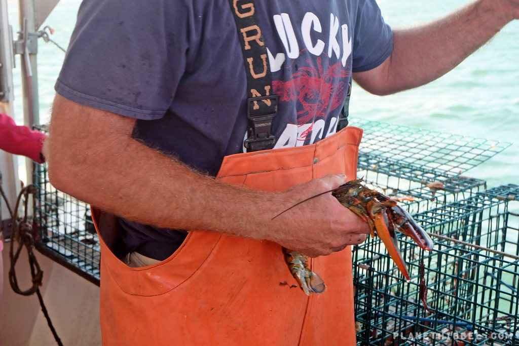 Lobsterfishing5