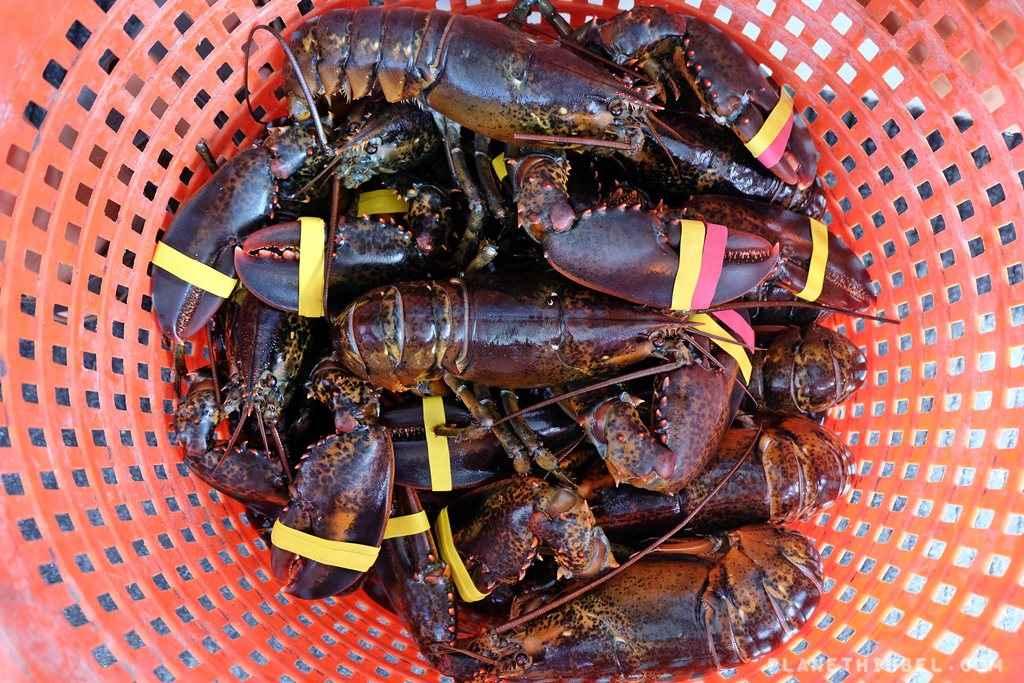 Lobsterfishing8